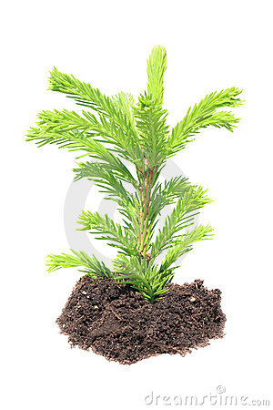 Free Green Seedling Isolated Royalty Free Stock Photos - 19965468