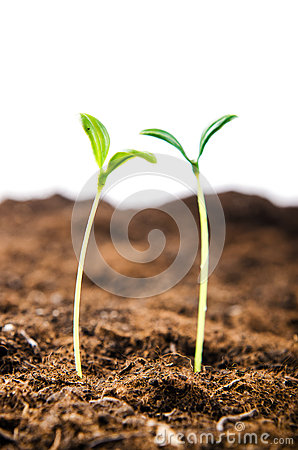 Green seedlings in new life