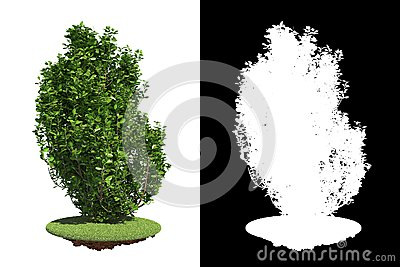 Green Shrub with Detail Raster Mask.