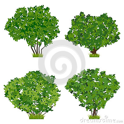 Free Green Shrubs Vector Set Royalty Free Stock Photography - 29548917