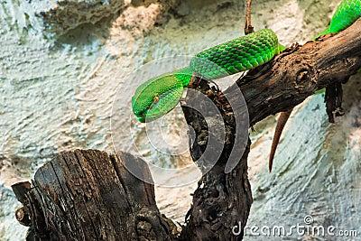 Green Snake creeps on tree