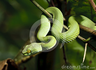 Green snake in rain forest