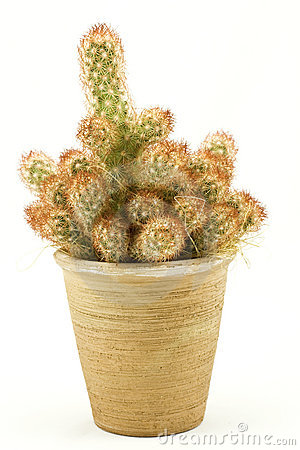 Green spikey cactus