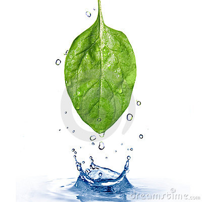 Free Green Spinach Leaf With Water Drops And Splash Stock Image - 13778391