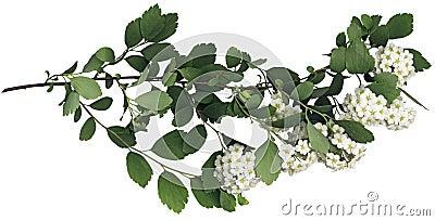 Green spring branch