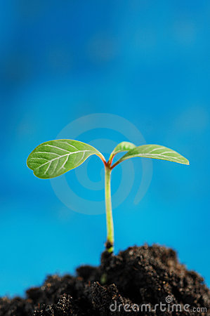 Free Green Sprout Royalty Free Stock Image - 2229476