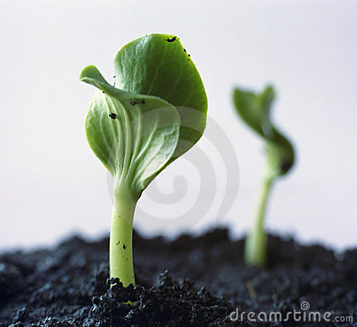 Free Green Sprout Stock Images - 240814