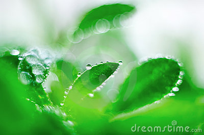 Green sprout with dewdrops