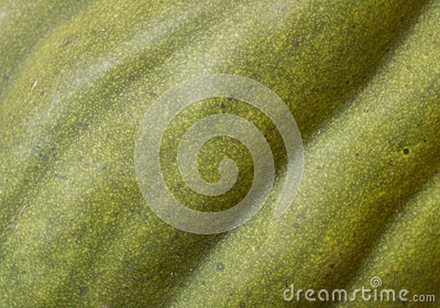 Green squash background