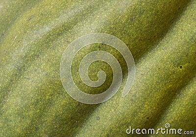 Green squash background