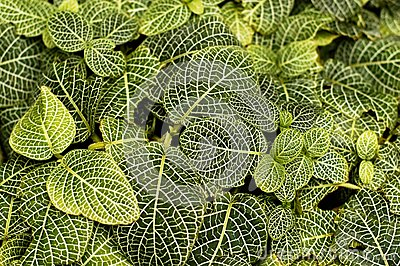 Green striped leaves background