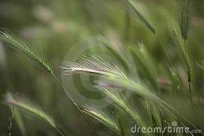 Green Summer Grass