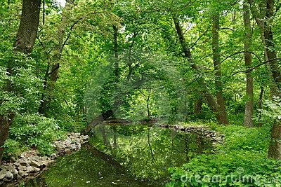 Green summer park with stream