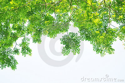 Green summer tree leaves pendant foreground