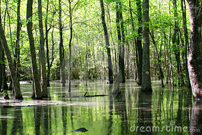 Green swamp land