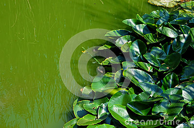 Green swamp water background 2