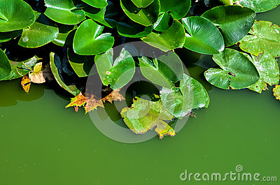 Green swamp water background 1