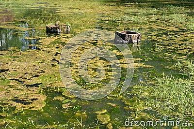 Green swamps