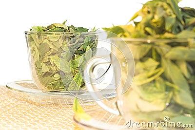 Green tea freshness