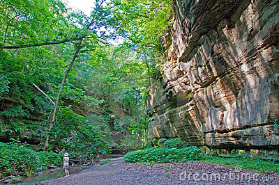 Green time in a sandstone canyon