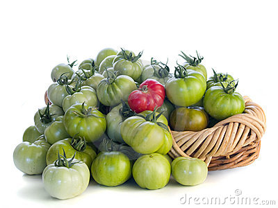 Green tomatoes and one red one