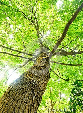 Free Green Tree Stock Photos - 13272763