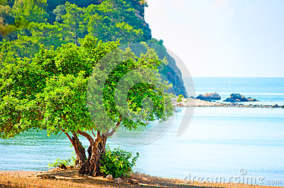 Green tree on beach