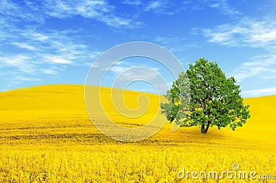 Green tree in the field
