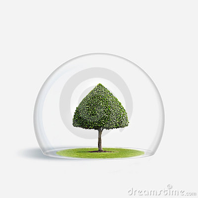 Free Green Tree Is Under The Protection Royalty Free Stock Photo - 7836315