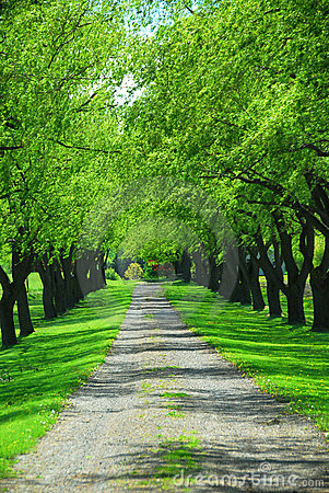 Free Green Tree Lane Royalty Free Stock Images - 1208019