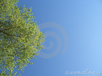 Green tree with leaves in the blue sky