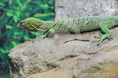 Green tree monitor