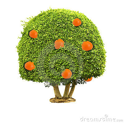 Green tree with orange fruits