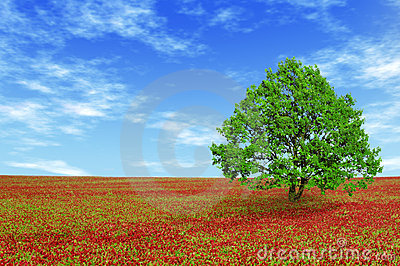 Green tree in red field