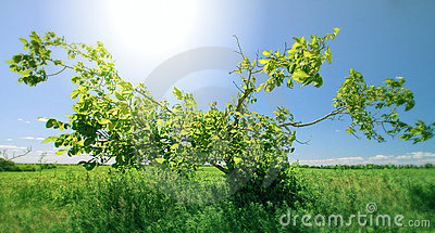 Green tree in sunny day