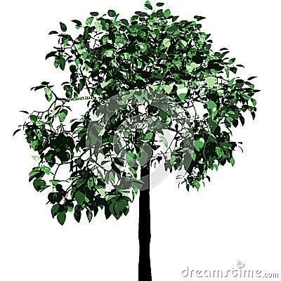 Green tree. Vector.