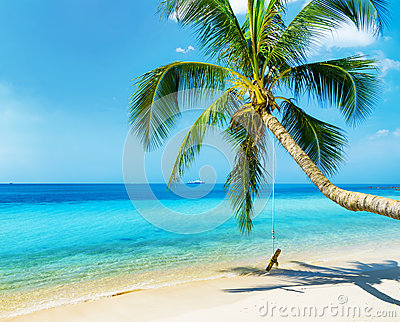 Green tree on white sand beach