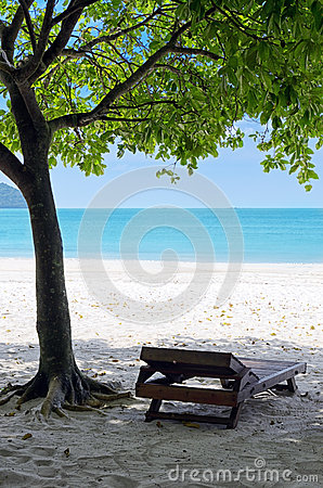 Green tree on a white sand beach