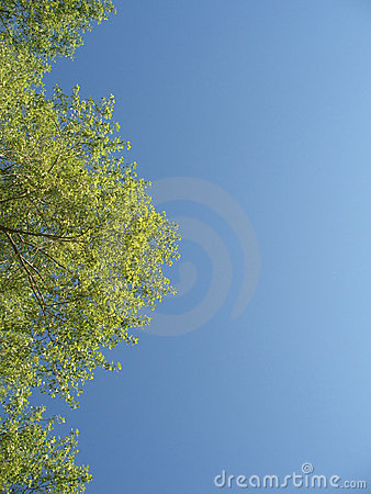 Free Green Tree With Leaves In The Blue Sky Stock Image - 15302101