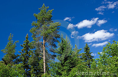 Green trees and blue sky