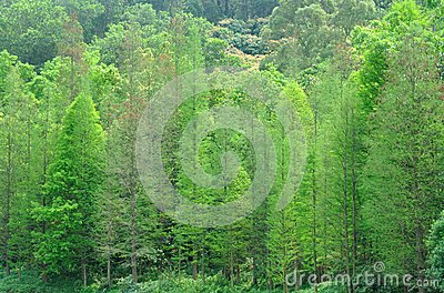 Green trees on hill