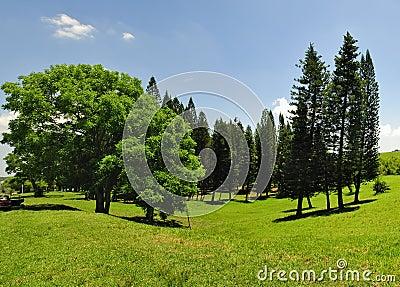 Green trees panorama