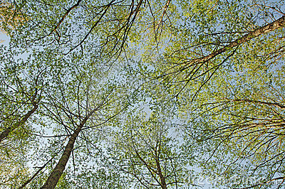 Green trees photographed from bellow