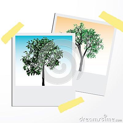 Green trees on polaroid cards.