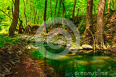 Green treetops in a forest creek