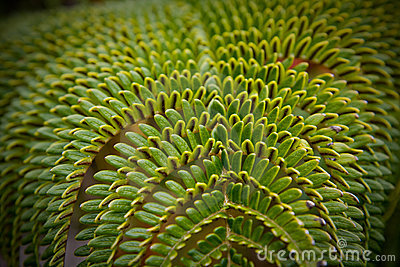 A green tropical fern