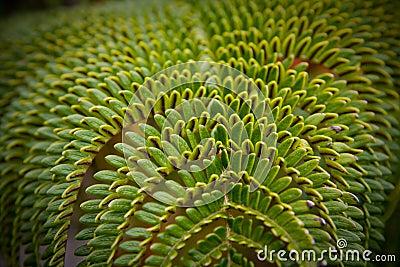 A green tropical fern