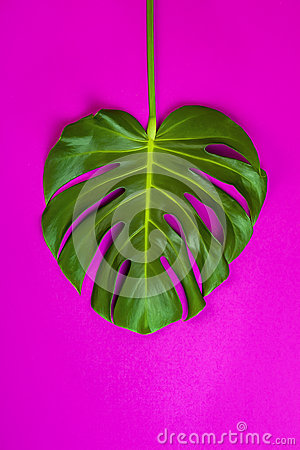 Free Green Tropical Palm Leaf On Pink Colored Background. Minimal Flat Lay Style. Overhead, Top View, Copy Space. Stock Photo - 92728970