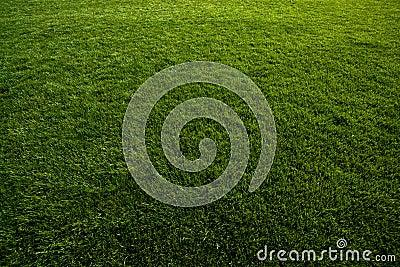 Green turf at soccer field