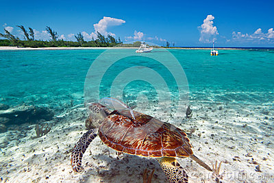 Green turtle underwater in Mexican scenery